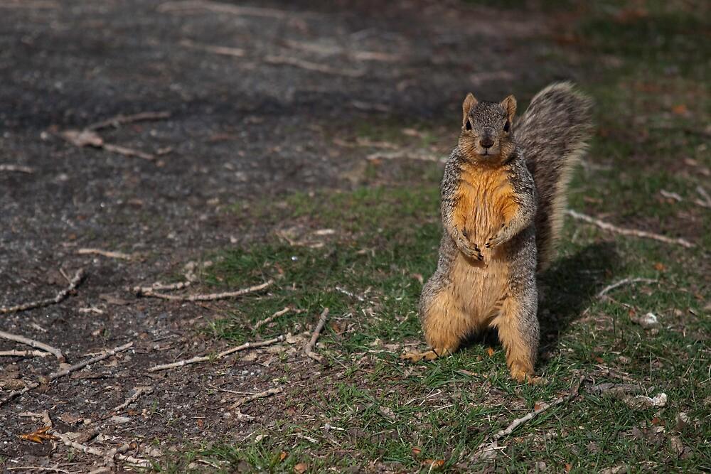 Silly Squirrel by Belle Ciezak