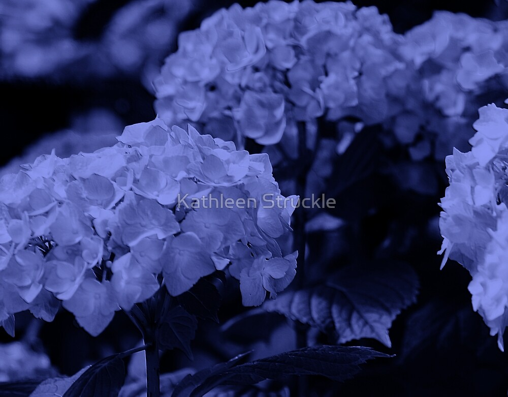 Blue Hydrangea by Kathleen Struckle