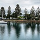 Pine Trees Forster 877 by kevin Chippindall