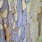 Eucalyptus true colours by Robyn Williams