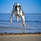 I can FLY by GreyhoundSN