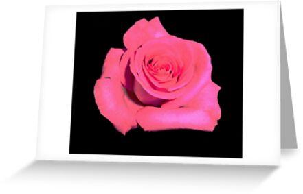 Stand Alone Rose by worpledinker