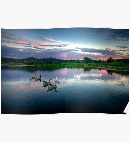 Sunset Ducks Poster