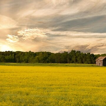 Canadian Fields of Yellow by MarylouBadeaux