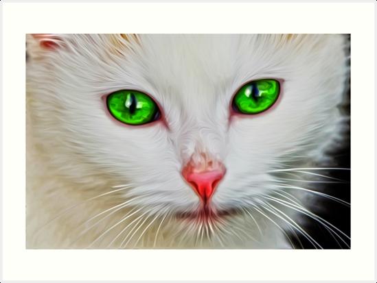 Green Eyes Cat by Tr0y