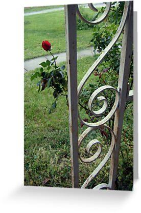 Front Porch Rose by worpledinker