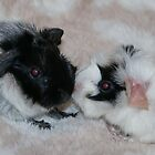 Two Day Old Guinea Pigs by AnnDixon