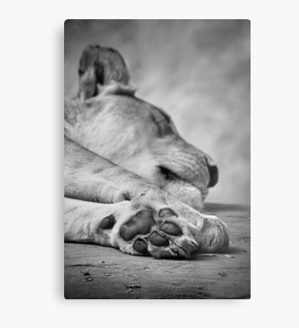 The Lion's Paw Metal Print