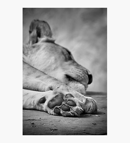 The Lion's Paw Photographic Print