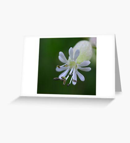 Macro 2888 Greeting Card