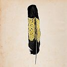 Yellow Tailed Black Cockatoo Feather by Daniel Watts