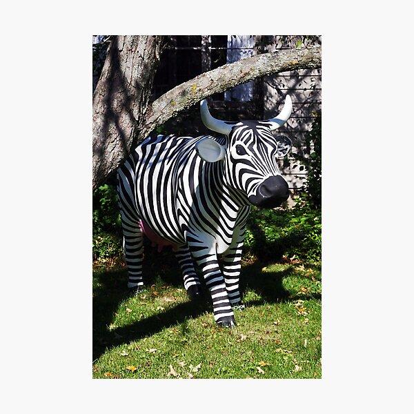 Zebra? Cow? Huh?   Photographic Print
