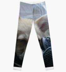 Sleepy Corgi Leggings