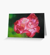 Rosa Flamenca Greeting Card