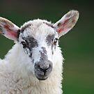 Sheep by Kasia Nowak