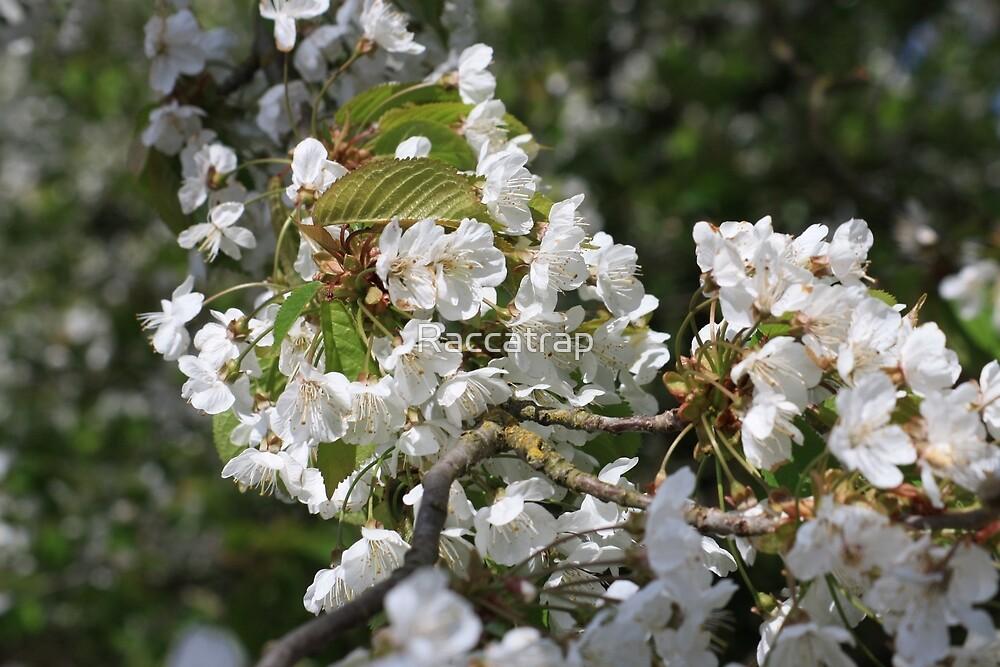 Blossom Branch by Raccatrap
