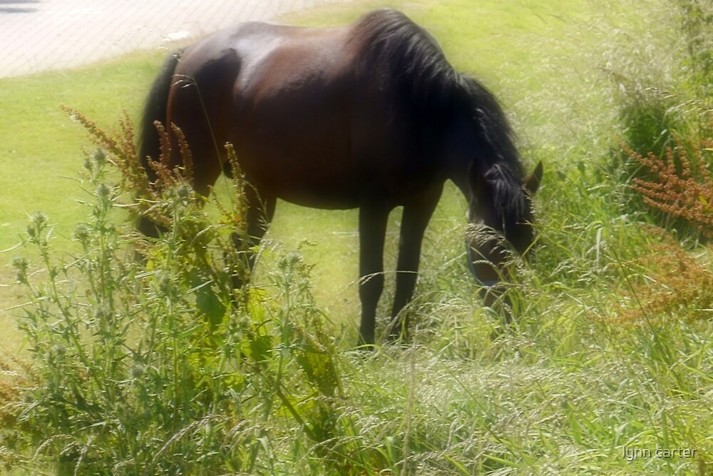 Horse grazing in the sunshine by lynn carter