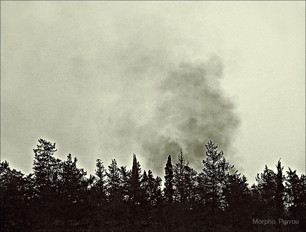 destruction of nature by Morpho  Pyrrou