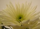 White Chrysanthemum by Carol Bleasdale