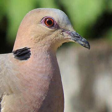 A turtle dove  by Happyart