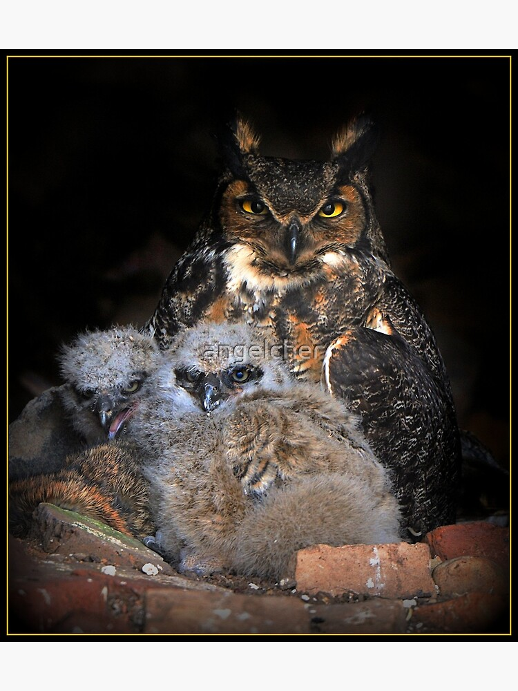 Great Horned Owl and Owlet by angelcher