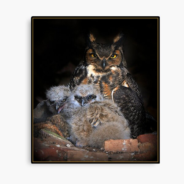 Great Horned Owl and Owlet Canvas Print