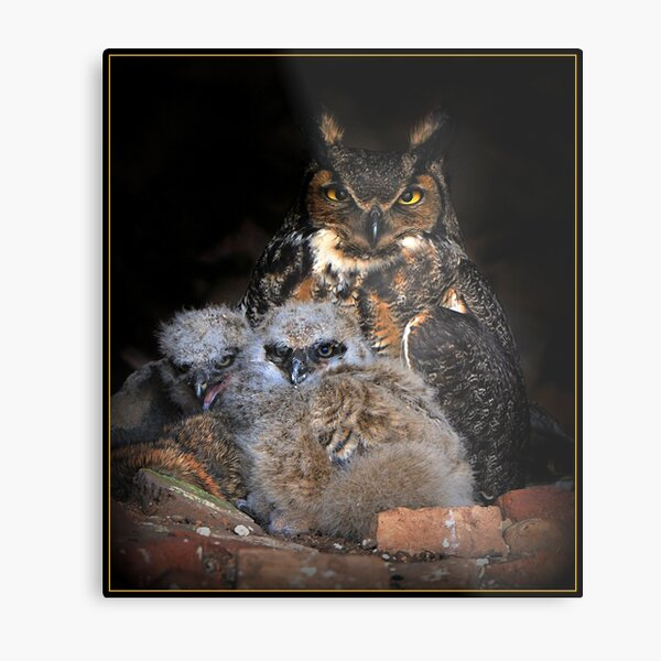 Great Horned Owl and Owlet Metal Print