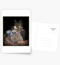 Great Horned Owl and Owlet Postcards