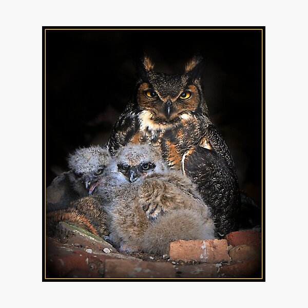 Great Horned Owl and Owlet Photographic Print