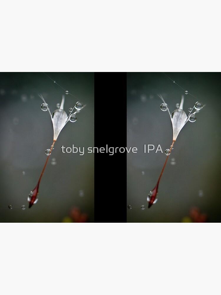 Drops on a web by tobysnelgrove