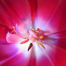 bunter Blütentraum, Tulpen, Tulpe pink von rhnaturestyles