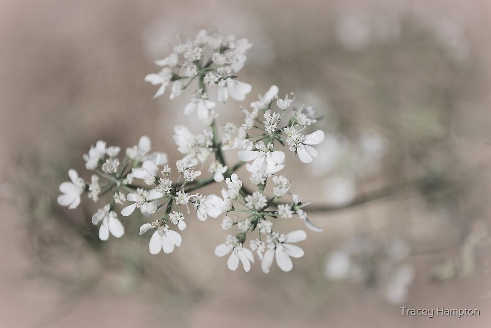 Untitled by Tracey Hampton