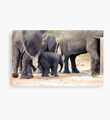 THE LITTLE GUARDED BABY ELEPHANT Canvas Print