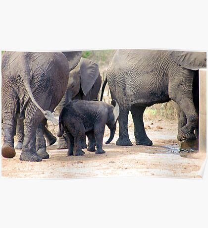 THE LITTLE GUARDED BABY ELEPHANT Poster