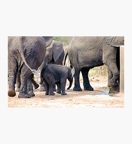 THE LITTLE GUARDED BABY ELEPHANT Photographic Print