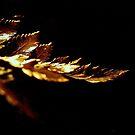 Gold on black  by jonpalma