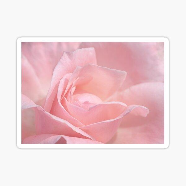 A Delicate Pink Rose Sticker
