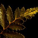 So Golden by jonpalma