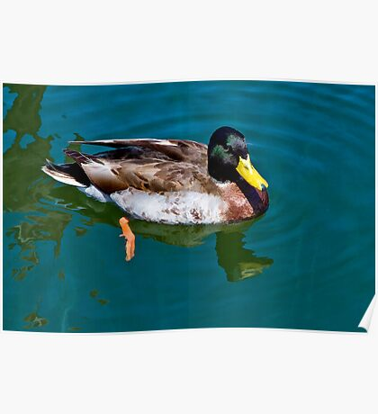 Just Ducky! Poster