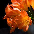 Orange Glow by Maureen Jochetz