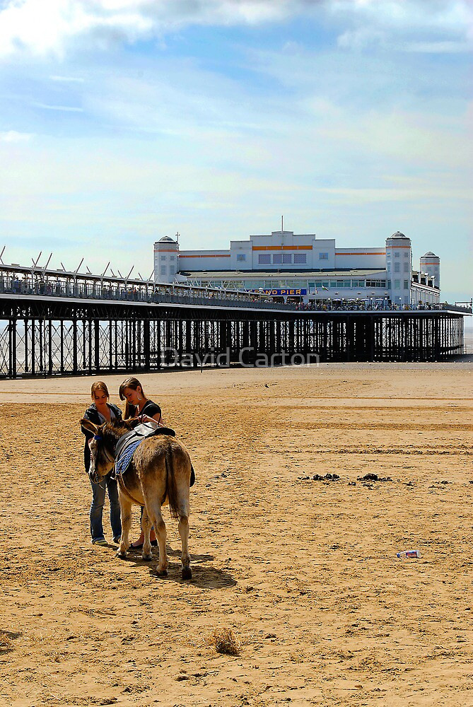Donkey on Weston Super Mare beach by David Carton