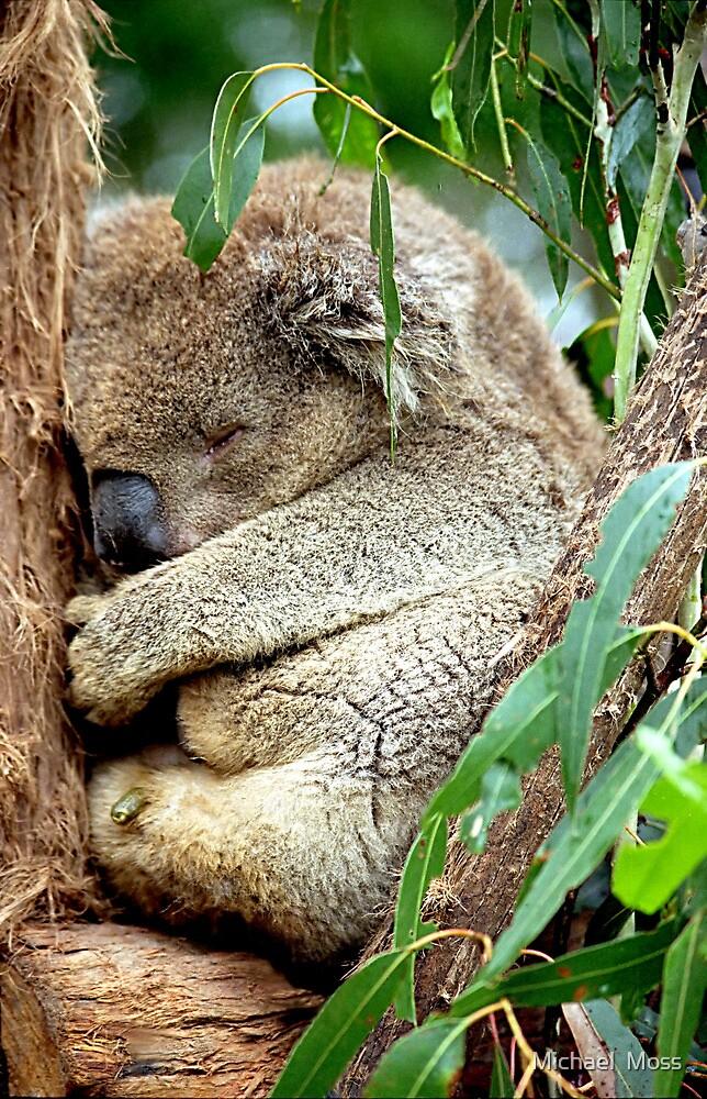 Sleeping Koala by Michael  Moss