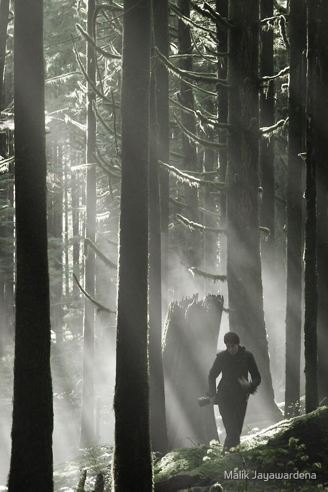 An Eye in the Forrest by Malik Jayawardena