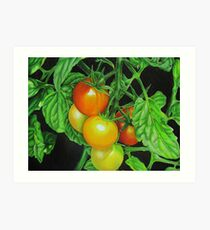 Tomatoes - Garden treat Art Print