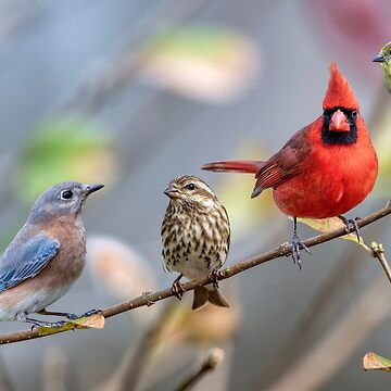 Songbird Beauties on a Branch by Miracles