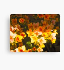 Goldust Flowers Canvas Print