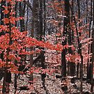 Fall Forrest in Red by mwfoster