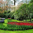 Frühlingsfarben - Keukenhof Gardens, Holland von VoxCeleste