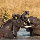 Elephants wrestling, South Africa by Erik Schlogl