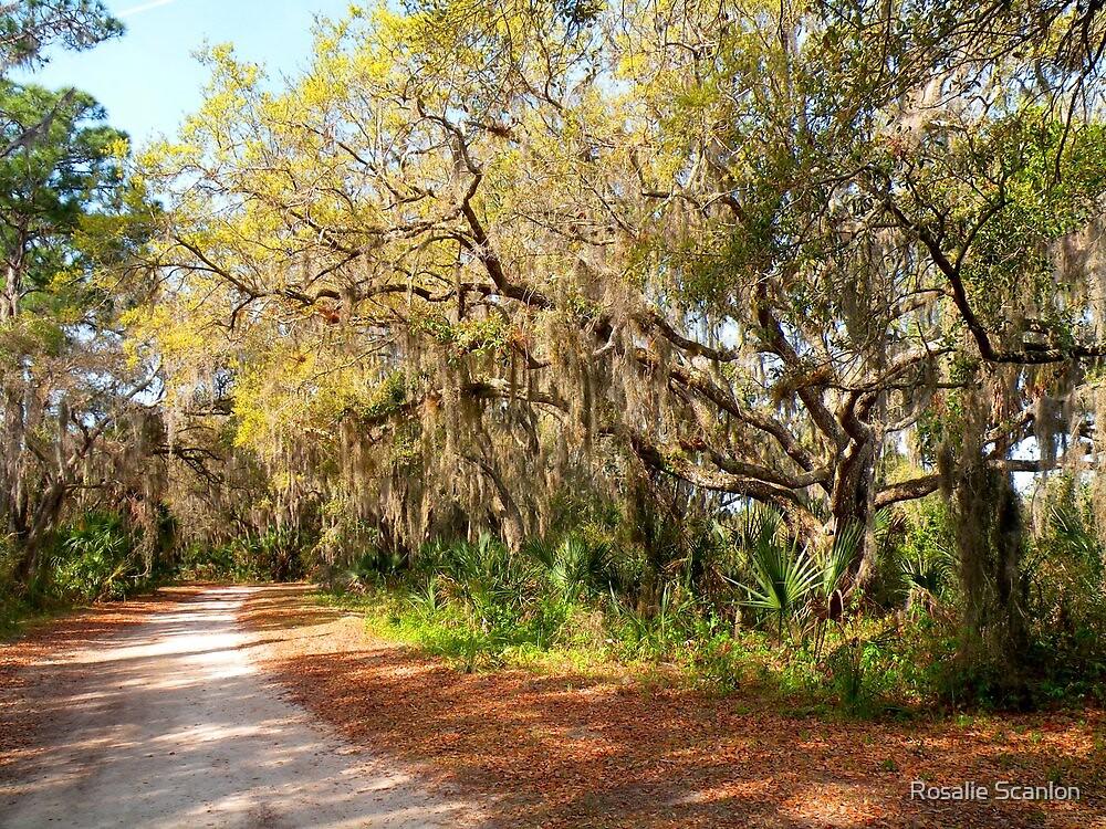 Old Oak Trees and Moss by Rosalie Scanlon